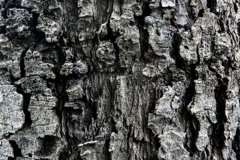 Bakgrund och texturerar arkivfoto