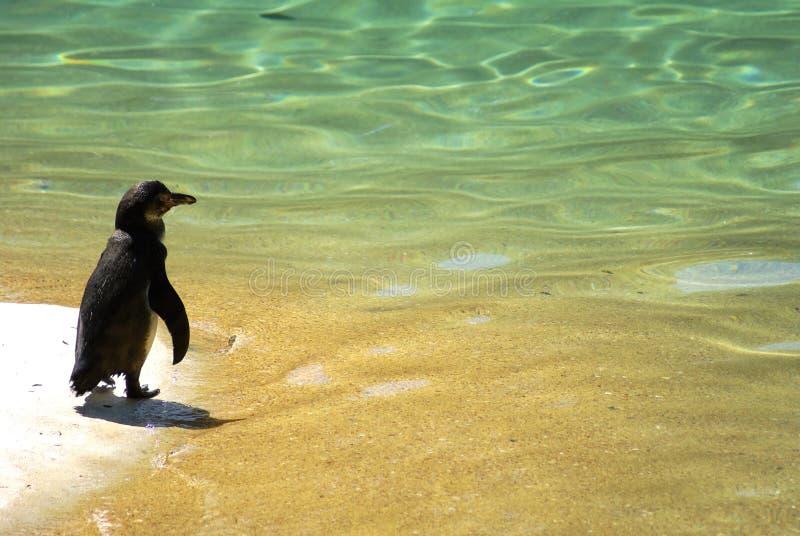 bakgrund semestrar pingvinsandvatten royaltyfria bilder