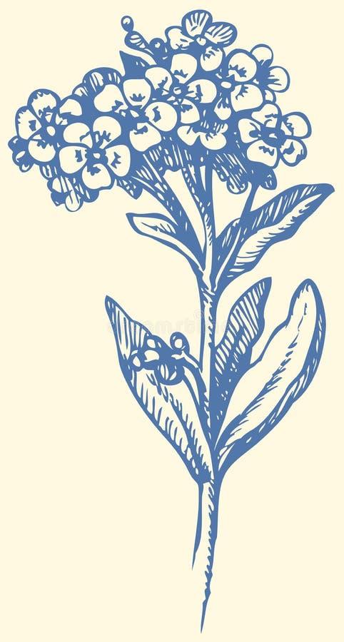 bakgrund som tecknar den blom- gräsvektorn Kvist av förgätmigejen vektor illustrationer