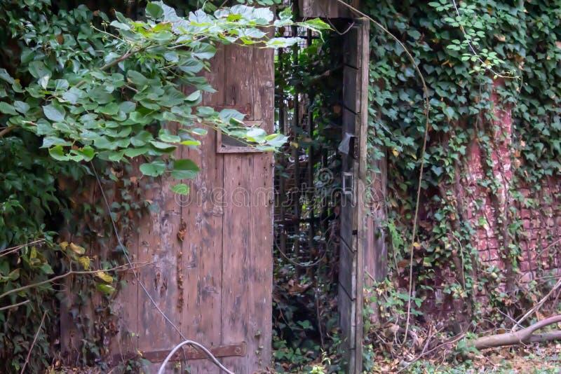 bakgrund som visar detaljer av ett övergett hus med en gammal dörr som invaderas nu av växter arkivfoton
