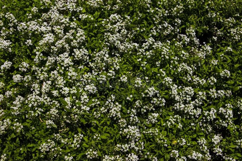Bakgrund texturglänta av vildblommor royaltyfria foton