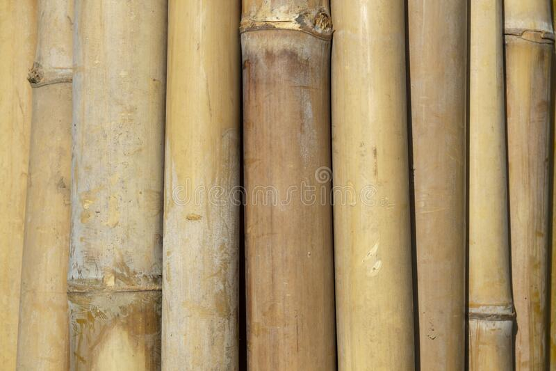 Bakgrund till grönt bamboofält arkivbild