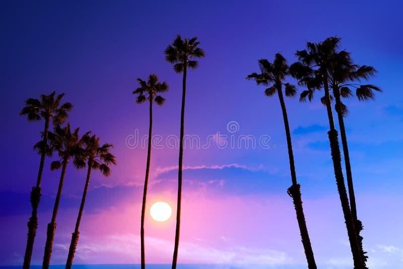 Bakgrund USA för silohuette för himmel för Kalifornien hög palmträdsolnedgång arkivfoton