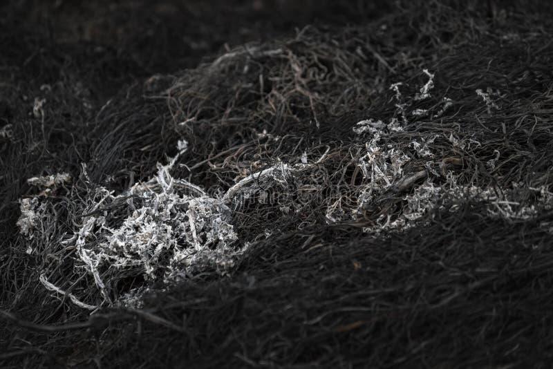 Bakgrundsaska från bränd gräsäng royaltyfri fotografi
