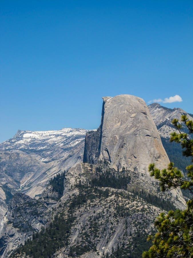 bakgrundsbönor stänger den isolerade naturströmgrodden upp white arkivfoto