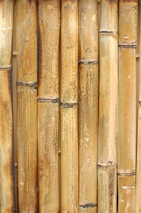 bakgrundsbambu arkivbilder