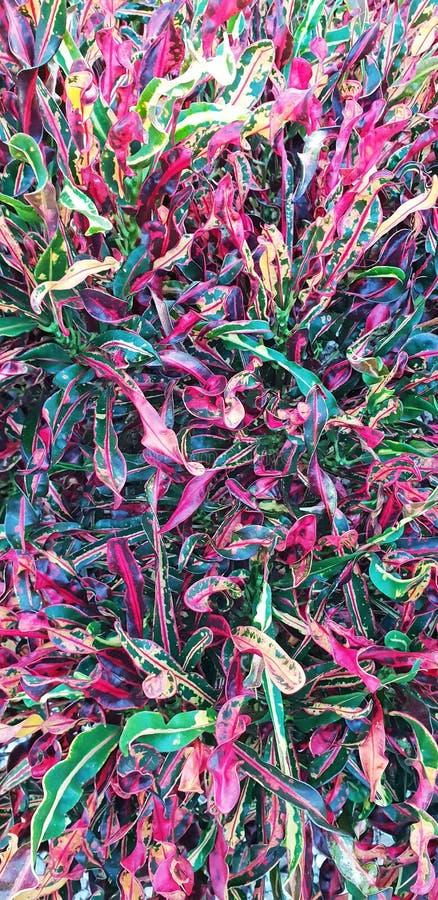 bakgrundsbanret blommar datalistor little rosa spiral Härlig färgrik blom- orientering Tropisk sidabakgrund arkivbilder