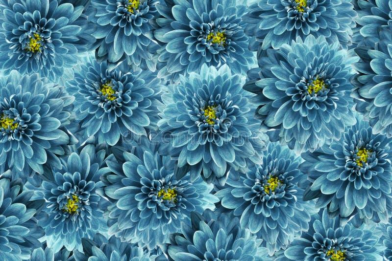 bakgrundsbanret blommar datalistor little rosa spiral Turkos blommar krysantemumet Närbild blom- collage vita tulpan för blomma f royaltyfria bilder