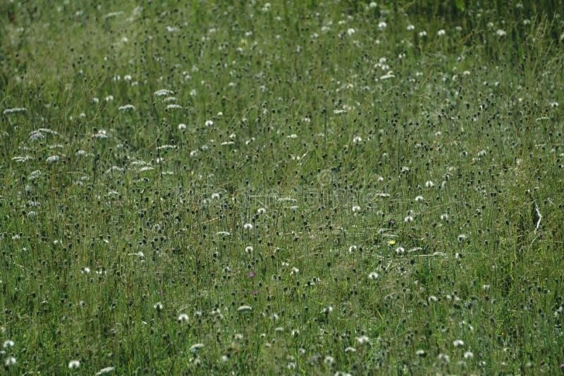 Bakgrundsbild av det frodiga gräsfältet under blå himmel arkivfoto