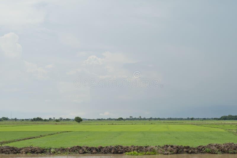 Bakgrundsbild av det frodiga gräsfältet under blå himmel arkivbilder