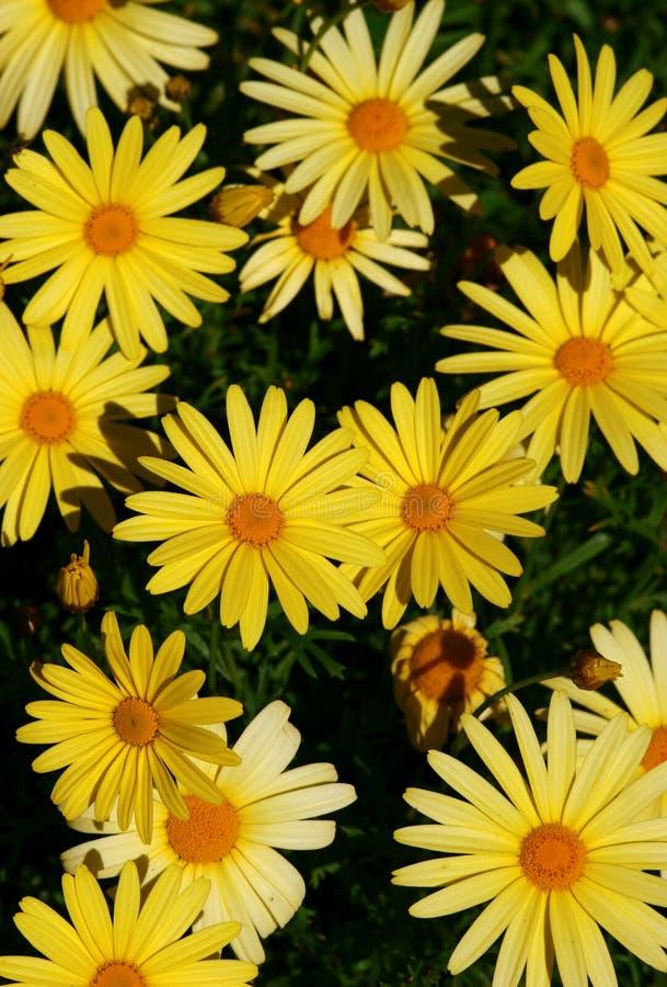Download Bakgrundsblomma arkivfoto. Bild av sommar, växt, design - 238128