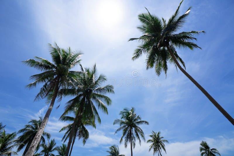bakgrundsbluen gömma i handflatan skytrees lopp, sommar, semester och tropisk strand Kokosnötpalmträd royaltyfria foton