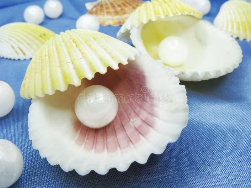 bakgrundsbluen pryder med pärlor havsskal royaltyfria foton
