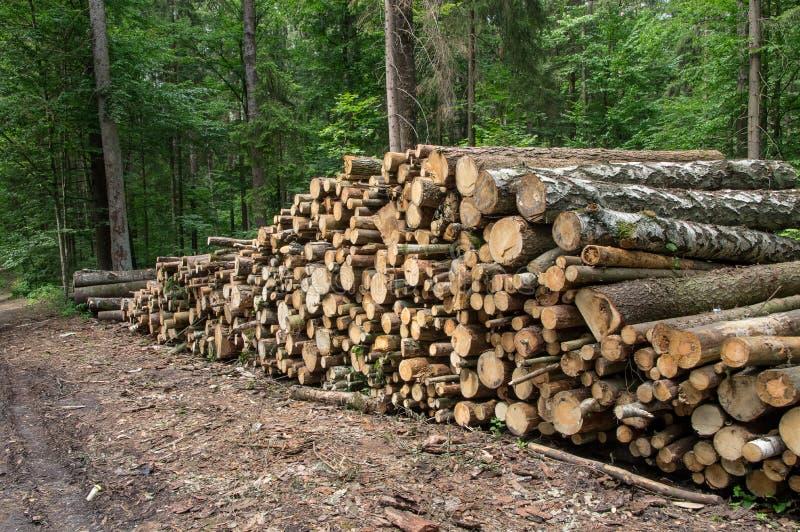 Bakgrundsbunten av loggar in skogen, sidosikt arkivfoto