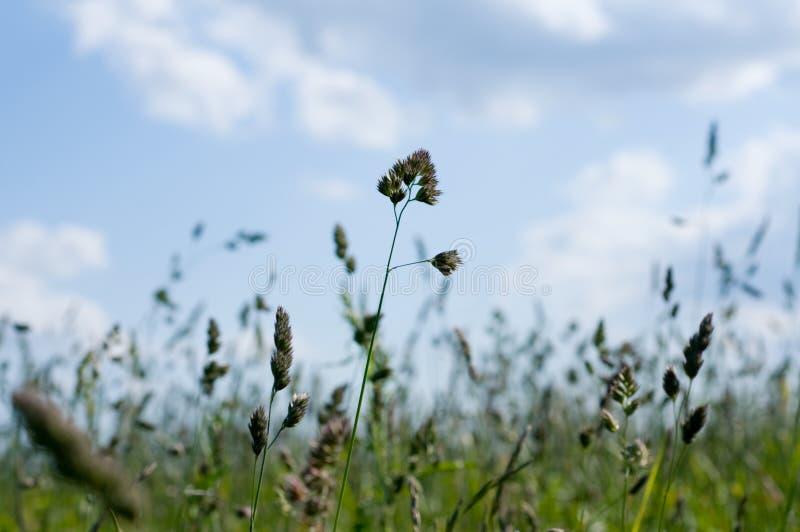 bakgrundsfält fotografering för bildbyråer