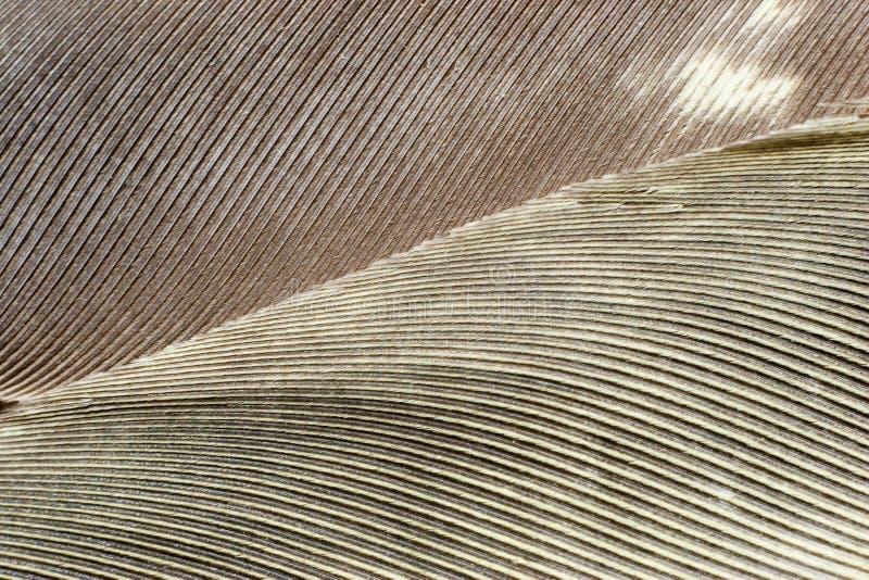bakgrundsfjädergray arkivfoton