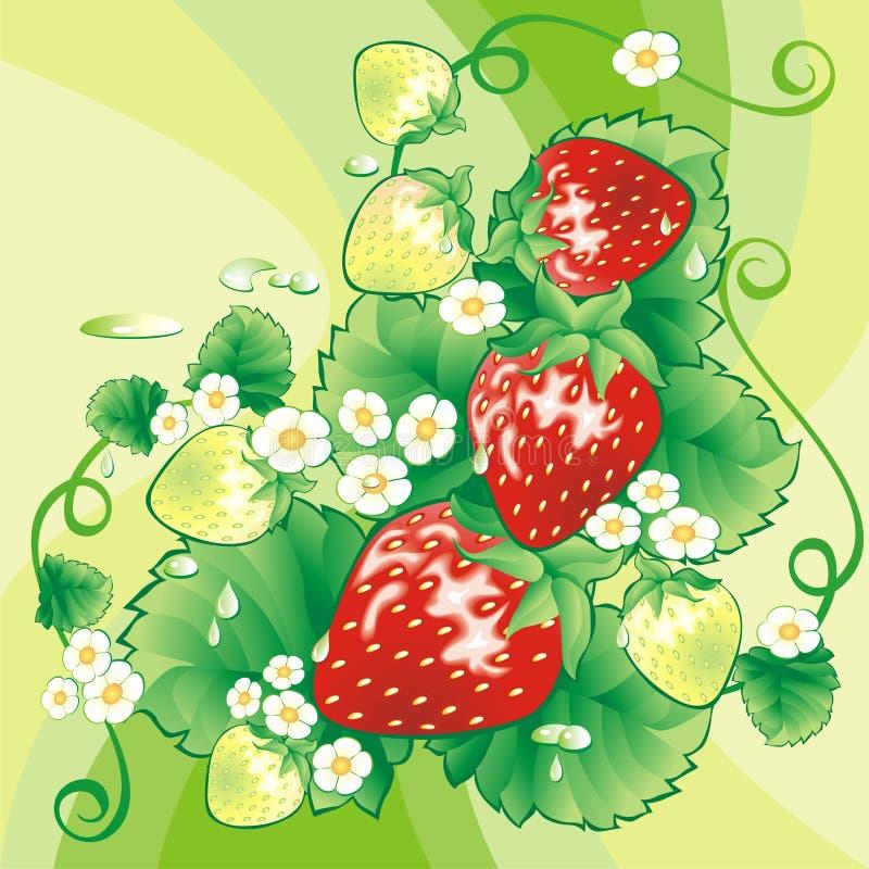 bakgrundsjordgubbe vektor illustrationer