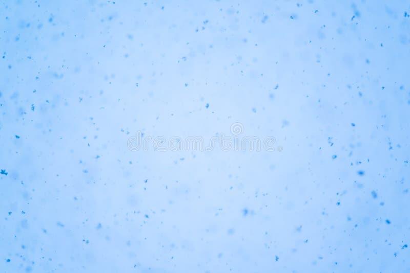 Bakgrundsljus - blått royaltyfri bild