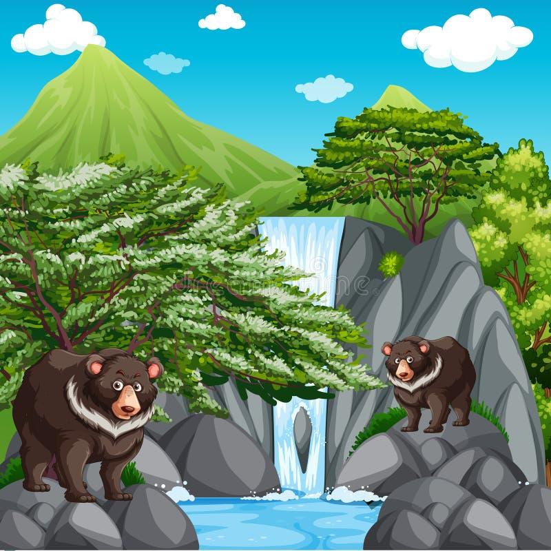 Bakgrundsplats med två björnar på vattenfallet arkivbilder
