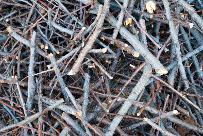 Bakgrundstextur klippte filialer av ett träd i en hög av småskog royaltyfri fotografi