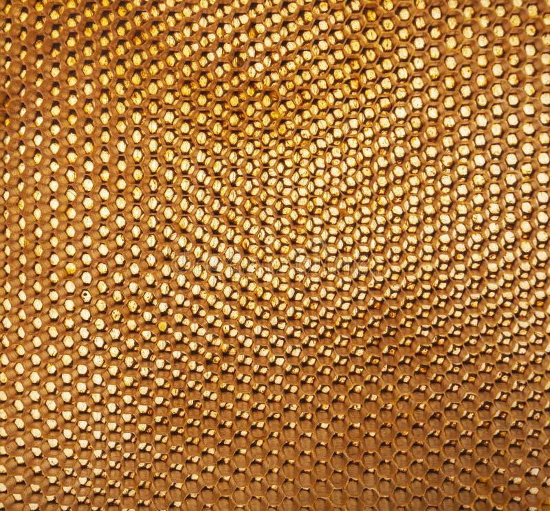 Bakgrundstextur och modell av ett avsnitt av honungskakan arkivfoto