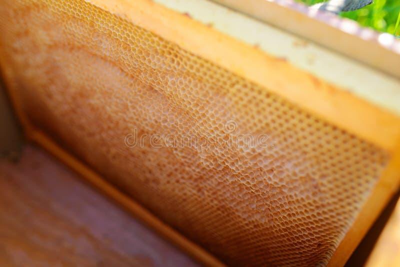 Bakgrundstextur och modellen av ett avsnitt av vaxhonungskakan från en bibikupa fyllde med guld- honung i en full ramsikt arkivfoto