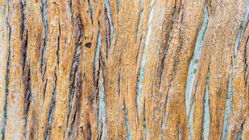 Bakgrundstextur - tätt upp av modellen för trädskäll arkivfoto