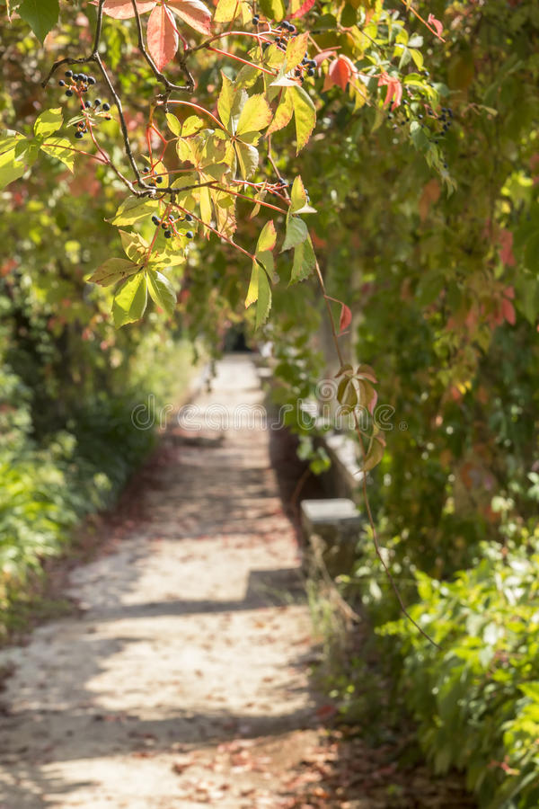Bakgrundsträdgård av kloster Templar i Tomar, Portugal royaltyfri foto