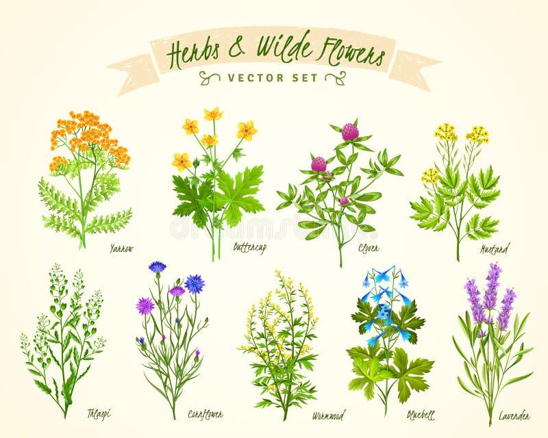 Bakgrundsuppsättning för örter och för lösa blommor vektor illustrationer