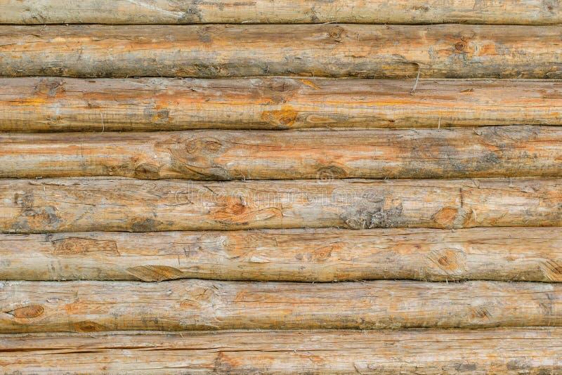 Bakgrundsvägg av ett stort antal hela träd arkivbild