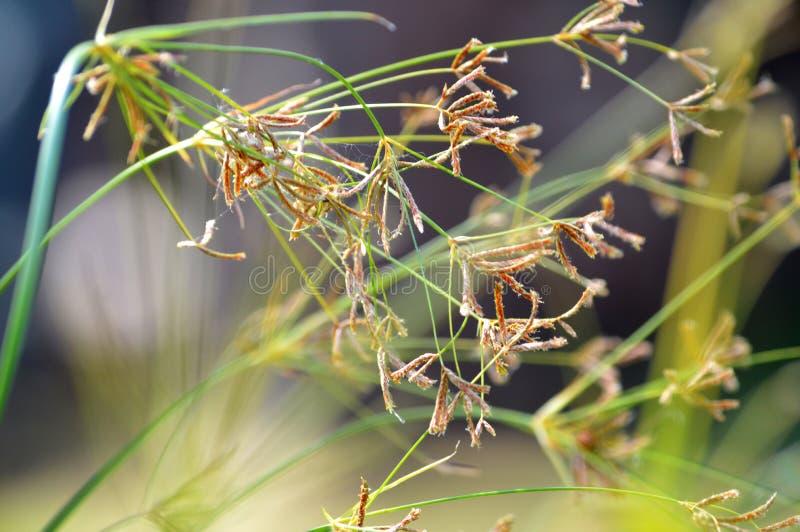 Bakgrundsväxter arkivfoto