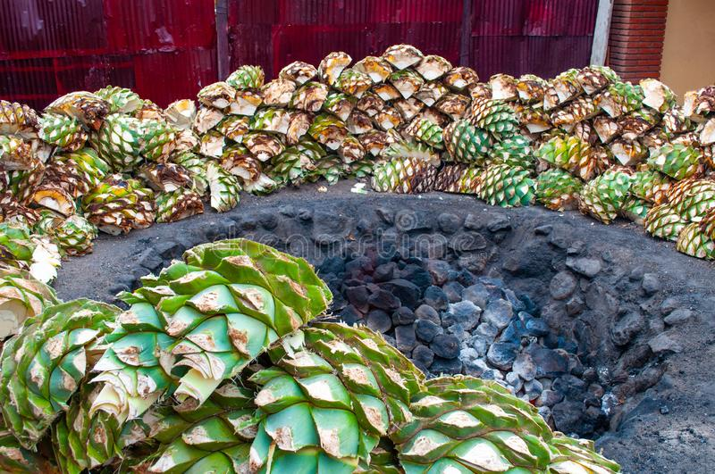 Baking blue agave hearts in ground oven pit, tequila factory stock photography