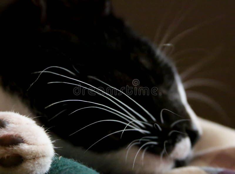 Bakkebaarden van een binnenlandse kattenslaap royalty-vrije stock foto