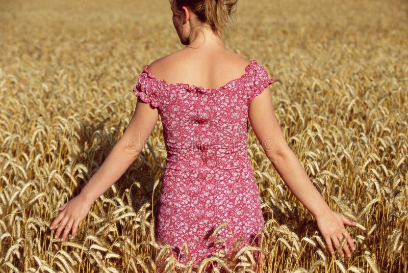 bakre plattform barn för siktswheatfieldkvinna royaltyfri fotografi