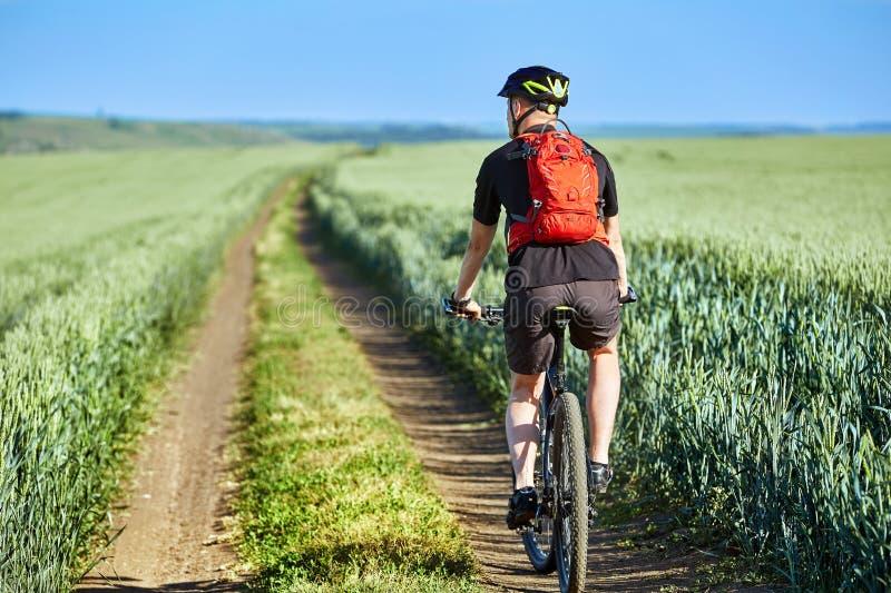 Bakre sikt av den unga cyklistridningcykeln på vägen av fältet royaltyfri fotografi