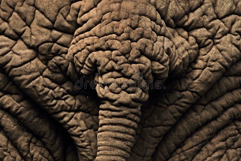 Bakre sikt av en afrikansk elefant nära sjömanyara royaltyfria foton