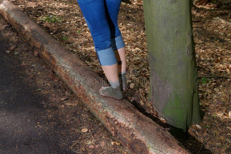 Bakre sikt av kvinnaben i jeans, medan gå barfota på en trädstam i en skog royaltyfri fotografi