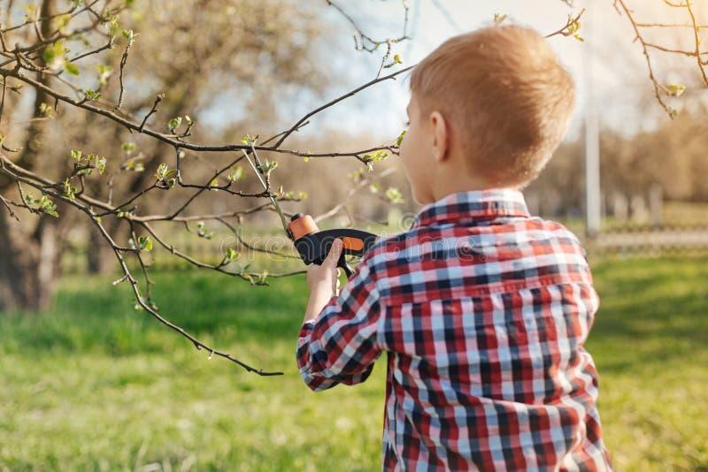 Bakre sikt av lite pojken som beskär trädet royaltyfri foto