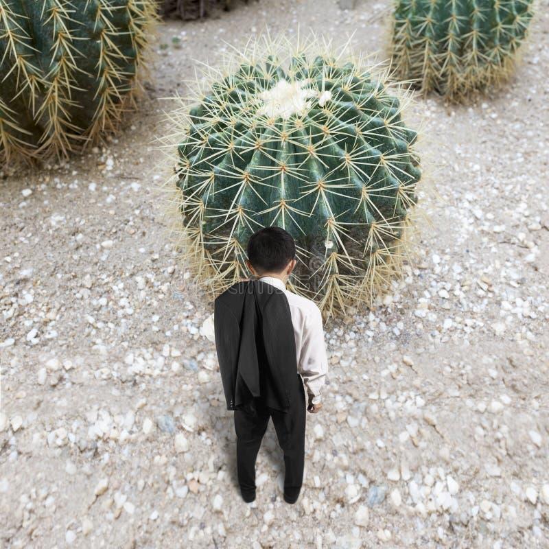 Bakre sikt av mannen med kaktuns royaltyfri bild