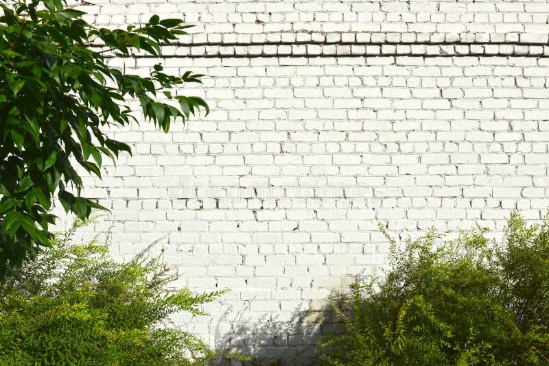 Bakstenen muur die met witte verf en struiken met groene bladeren wordt geschilderd royalty-vrije stock afbeelding