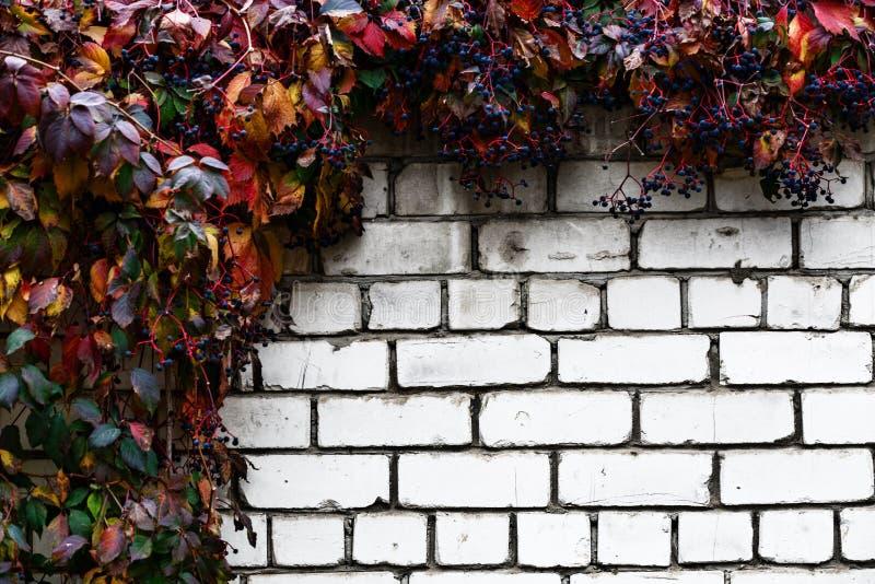 Bakstenen muur met decoratieve druiven abstracte achtergrond royalty-vrije stock afbeelding