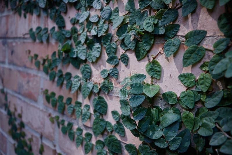Bakstenen muur met sommige takken op het stock foto's