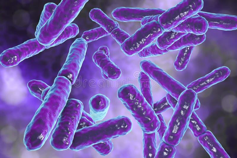 Bakterie Bifidobacterium, pozytyw beztenowe laseczkowate bakterie ilustracja wektor