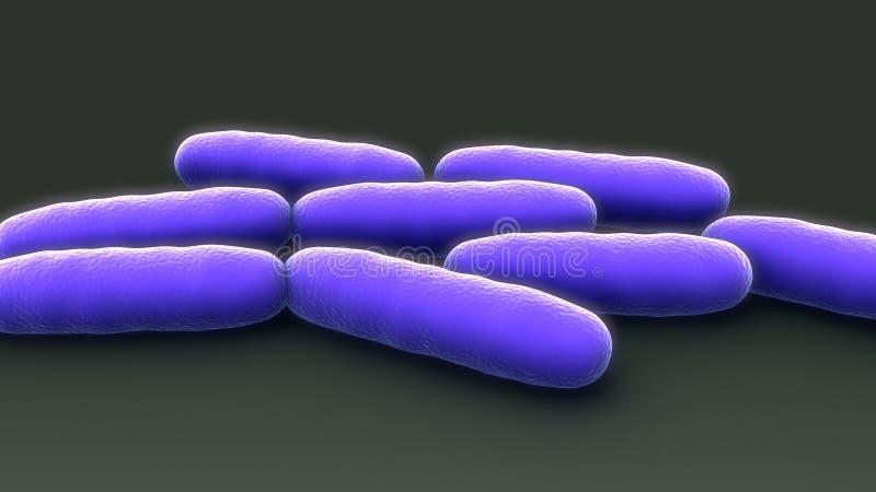 bakterie- tillväxt vektor illustrationer