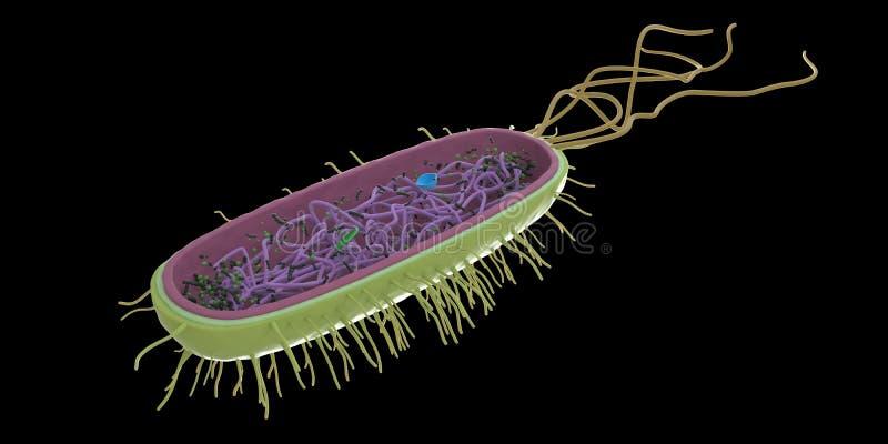 Bakterieanatomin stock illustrationer