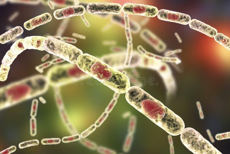 Bakterien-Bazillus Anthracis lizenzfreie abbildung