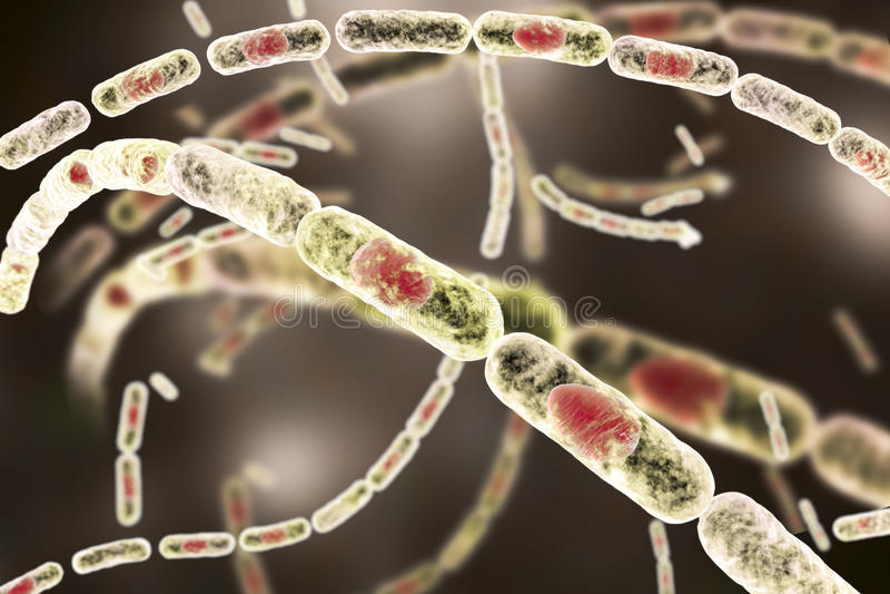 Bakterien-Bazillus Anthracis vektor abbildung