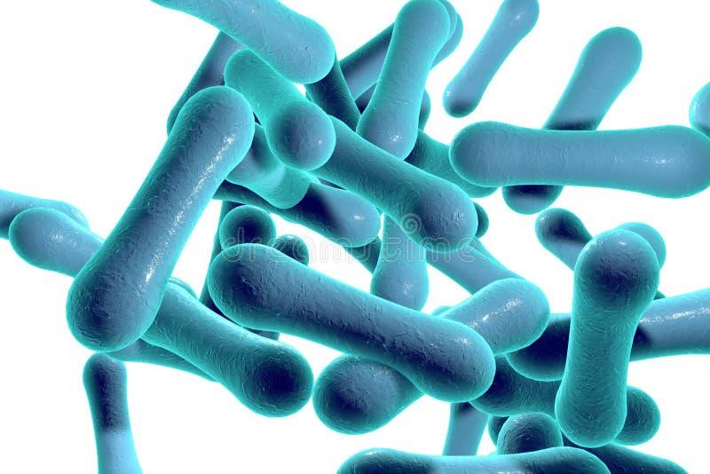 Bakterien, die Diphtherie verursachen lizenzfreie abbildung