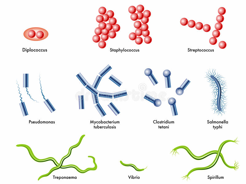 Bakterier vektor illustrationer