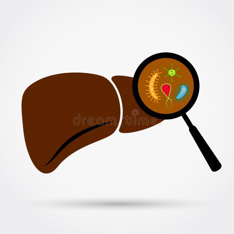 Bakterier eller infektion i lever vektor illustrationer